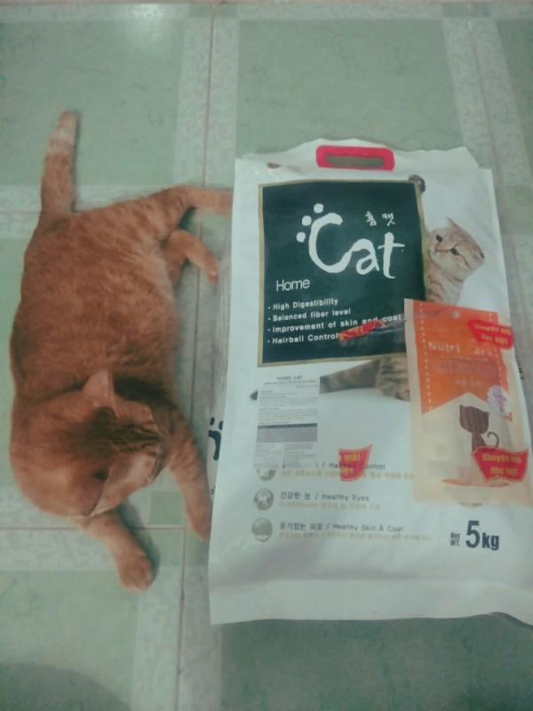Hạt cho mèo Hàn Quốc Home Cat