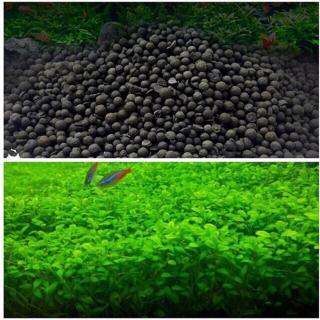 Cỏ trân châu ngọc trai & Set 500gram phân nền thủy sinh -hạt giống thủy sinh bể cá cảnh- dành cho hồ cá thủy sinh mini thumbnail