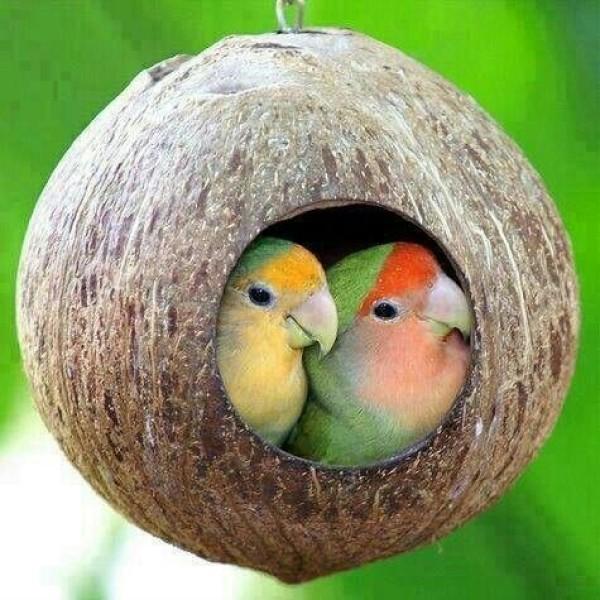 Tổ Chim, Sản Xuất Từ Vỏ Dừa, Đồ Chơi Cho Chim, Handmade , 100% Đồ Thủ Công Tự Nhiên, An Toàn Cho Chim Và Vật Nuôi