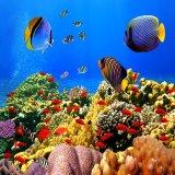 Bán Tranh Dan Tường Ca Biển Vtc Dv0001A Rẻ Nhất